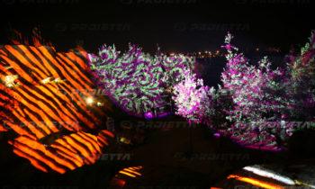 Projection de graphiques sur le feuillage des plantes